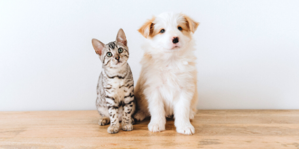 a kitten and a puppy sitting on a wooden floor