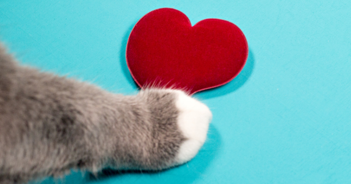 cat paw touching a felt valentine's day heart
